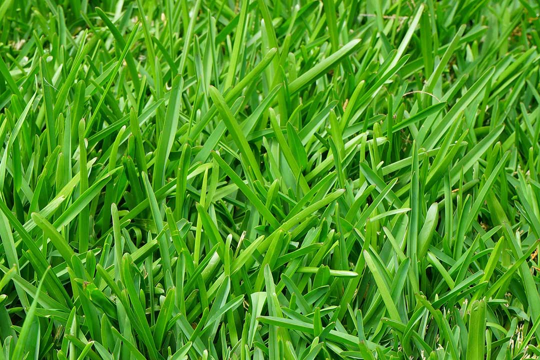 Lawn maintenance for lush, green, well manicured grass